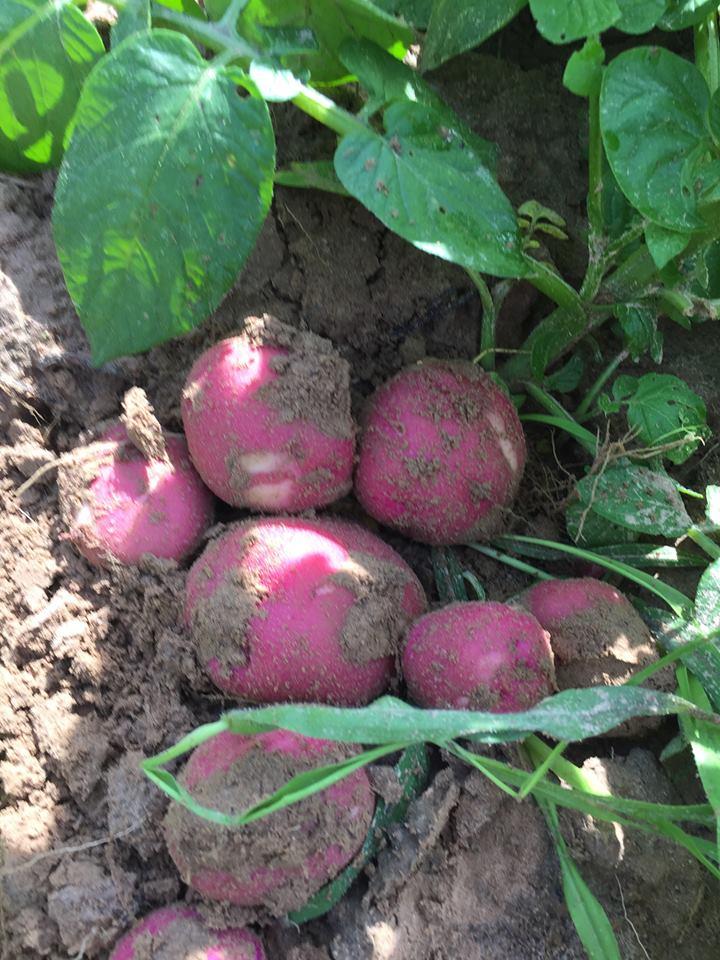 james family produce 2